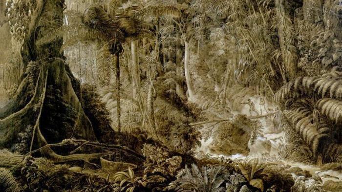 Le Comte de Clarac - La Foret Vierge du Bresil 1822